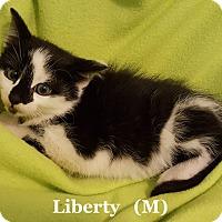 Adopt A Pet :: Liberty - Bentonville, AR