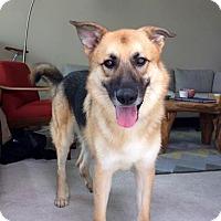 Adopt A Pet :: Milo - Thousand Oaks, CA