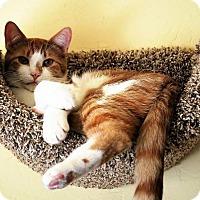 Adopt A Pet :: Rusty - Prescott, AZ