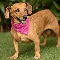 Adopt A Pet :: Penny - Rancho Palos Verdes, CA