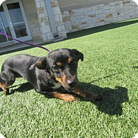 Adopt A Pet :: Rebel - North Richland Hills, TX