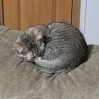 Adopt A Pet :: Diamond III - Muskegon, MI