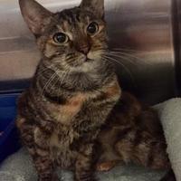 Adopt A Pet :: Arlene - Columbia, SC