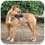 Photo 4 - German Shepherd Dog Mix Dog for adoption in Santa Barbara, California - Mango