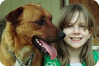 Labrador Retriever/Shepherd (Unknown Type) Mix Dog for adoption in Lexington, Kentucky - Thor