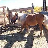 Adopt A Pet :: Stormy - Pueblo, CO