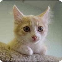 Adopt A Pet :: Vanilla - Modesto, CA
