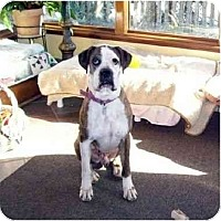 Adopt A Pet :: Cassius - Woolwich, ME