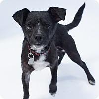 Adopt A Pet :: Hermey - Santa Barbara, CA