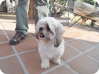 Shih Tzu Dog for adoption in Riverside, California - Bambi
