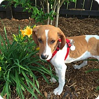 Adopt A Pet :: Ella - Knoxville, TN