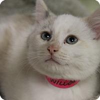 Adopt A Pet :: Willow - Medina, OH