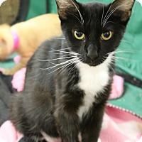 Adopt A Pet :: Andi Jo - Medina, OH