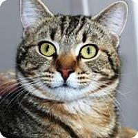 Adopt A Pet :: Wiskey - Casa Grande, AZ