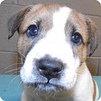 Adopt A Pet :: River - Oxford, MS