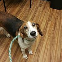 Adopt A Pet :: Jayna - Tampa, FL