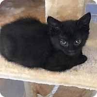 Adopt A Pet :: Melanie - Harrisonburg, VA