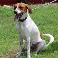 Adopt A Pet :: Milton - Glen Allen, VA