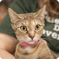 Adopt A Pet :: Sunday - Dallas, TX