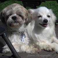 Adopt A Pet :: Gizmo - Sherwood Park, AB