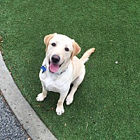 Adopt A Pet :: Cooper 2 (COURTESY POST) - Baltimore, MD