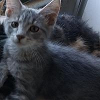Adopt A Pet :: Sage - Milwaukee, WI