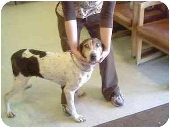 Coonhound (Unknown Type) Dog for adoption in Higginsville, Missouri - Unknown