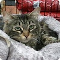 Adopt A Pet :: Lena - Anchorage, AK