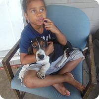 Adopt A Pet :: Rocco - Cincinnati, OH