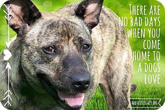 Plott Hound Mix Dog for adoption in Austin, Texas - Delphine