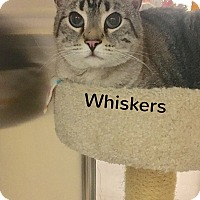 Adopt A Pet :: Whiskers - Foothill Ranch, CA