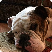 Adopt A Pet :: Fergie - Columbus, OH