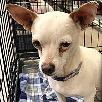 Adopt A Pet :: ABBOTT - Modesto, CA