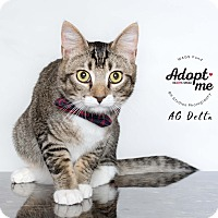 Adopt A Pet :: AG Delta - Houston, TX