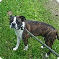 Adopt A Pet :: ODIE - Coudersport, PA
