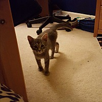 Adopt A Pet :: Janet - Stafford, VA