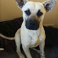 Adopt A Pet :: Zurik - Mesa, AZ
