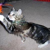 Adopt A Pet :: Tia - Liberty, NC