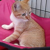 Adopt A Pet :: Summer - Flushing, NY