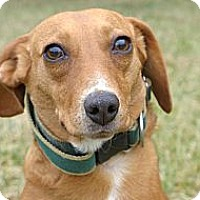 Adopt A Pet :: Peaches - Mocksville, NC