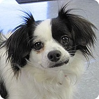 Adopt A Pet :: Sydney - Windham, NH