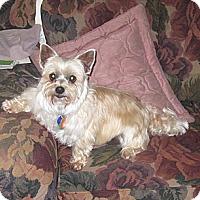 Adopt A Pet :: Bentley - Conroe, TX