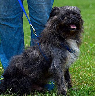 Terrier (Unknown Type, Medium) Mix Dog for adoption in Arden, North Carolina - Wesley