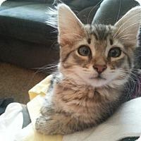 Adopt A Pet :: Monet - Lawrenceville, GA