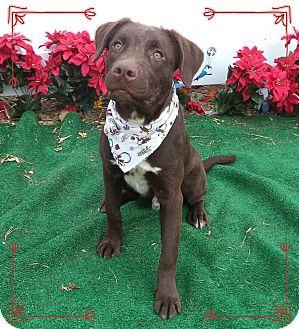 Labrador Retriever Mix Dog for adoption in Marietta, Georgia - RUDOLPH - adopted @ off-site