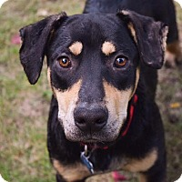 Adopt A Pet :: Arlington - Minneapolis, MN