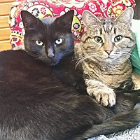 Adopt A Pet :: Abby and Jellybean - Lexington, KY