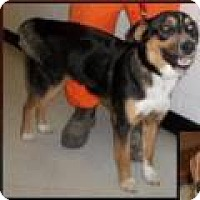 Adopt A Pet :: Molly - Kendall, NY