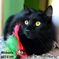 Domestic Mediumhair Cat for adoption in Conroe, Texas - MICHAELA