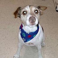Adopt A Pet :: WINSTON (HP) - Tampa, FL